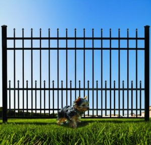puppy bars wrought iron fences Denton tx