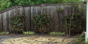 fence staining companies fence repair