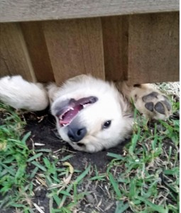 Prevent Dog From Digging Under Fence